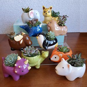 Animal Planter with Succulent: 1 for 20 / 2 for 30